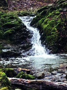 living flow